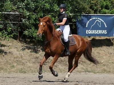 První ročník šampionátu v bezudidlovém jezdectví proběhne v Chrastavě