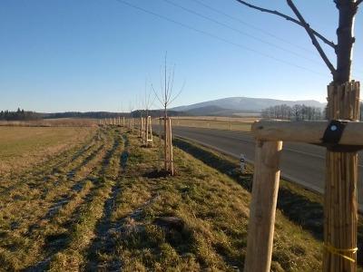 Liberecký kraj vybral dodavatele na ošetření významných alejí