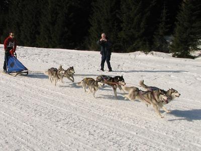 Aktualizace: Zásadský mid je dvoudenní závod psích spřežení