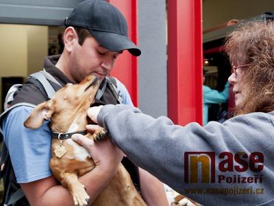 Povinné očkování psů proti vzteklině se v Jablonci koná 19. září