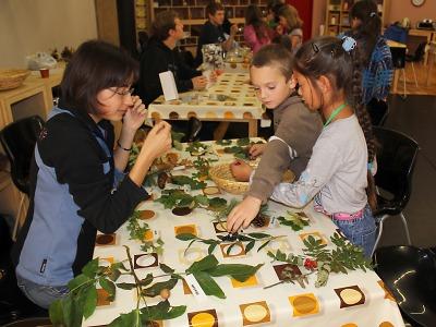 Den stromů v jabloneckém ekocentru oslaví 18. října