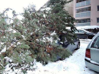 Stromy v kraji dál padají pod váhou sněhu a nově i kvůli větru
