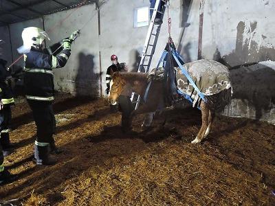 Hasiči zachraňovali v Klokočí koně, který se sám nemohl zvednout