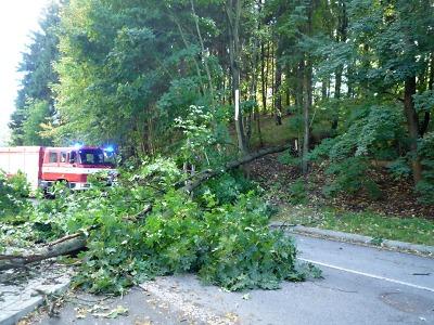 Kvůli silnému větru popadaly stromy na silnice i vedení elektřiny