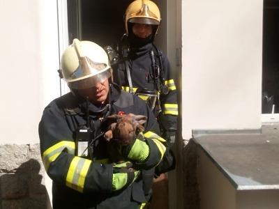 Z hořícího bytu v Jablonci zachránili hasiči kočku a králíka