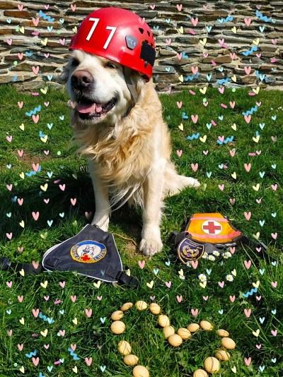 První služební pes libereckých hasičů Charlie oslavil 11 let