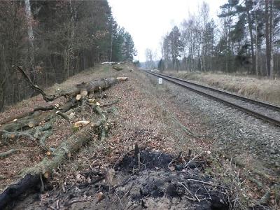 Za nepovolené kácení dřevin u trati Bakov - Jedlová dostali pokutu
