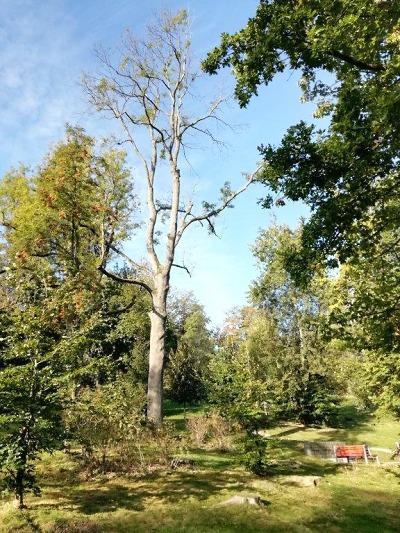 Nezdravé stromy budou v Jablonci kvůli bezpečnosti pokáceny