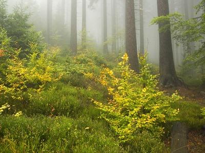 Znám křišťálovou studánku aneb o lese a vodě v Krkonoších