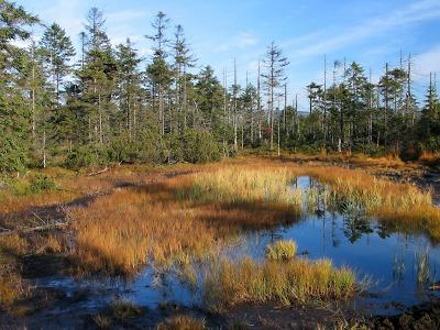Vydejte se prozkoumat tajemná rašeliniště Jizerských hor