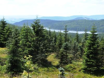 Ztraceného seniora našli v lese u přehrady Souš naštěstí včas