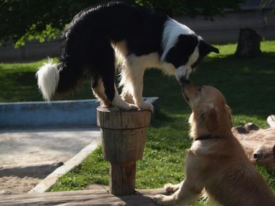 Volný pohyb psů zakážou v Jablonci na dvou místech