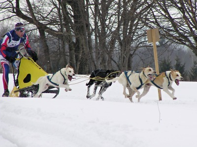 Závod psích spřežení budou pořádat v Zásadě