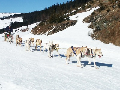 Pořadatelé odkládají závod psích spřežení v Zásadě