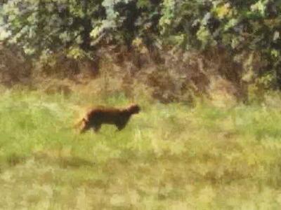 Na Prosečském hřebenu viděli šelmu, varují před vstupem do lesa