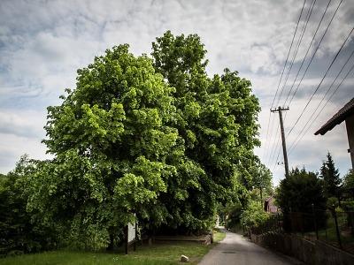 Liberecký kraj poskytne dotaci vítězným obcím Vesnice roku 2018