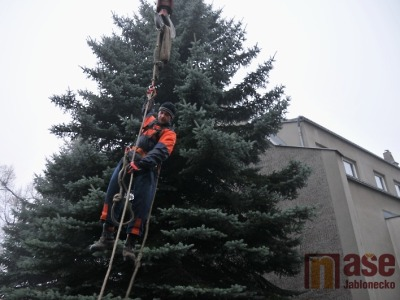 Nový vánoční strom v Jablonci postaví v úterý dopoledne