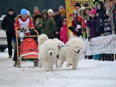 Nedostatek sněhu znemožní konání šampionátu psích spřežení v Zásadě