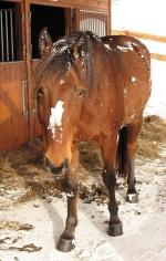 Koně bramborový salát nedostávají  a ke stromečku nechodí