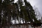Zlomený strom v Lučanech