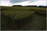 Agrosymboly u obce Pulečný