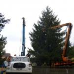 Vánoční strom v Tanvaldě již doputoval na své místo