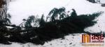 Padlý strom v Lučanech