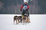Závody psích spřežení v Zásadě 2017