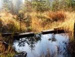 Nadace a spolek zachránily rašeliniště