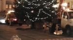 Odstrojení a rozřezání vánočního stromu v Jablonci nad Nisou ještě před vánočními slavnostmi