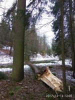 Čtvrteční vítr skácel i strom v Huntířově