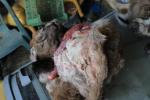 Zajištěná těla a kůže zvířat