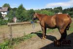 Sucho trápí nejen lidi nebo ryby, ale i koně