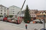 Vánoční strom před jabloneckou radnicí už stojí