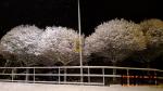 Popadané stromy po nočním sněžení zaměstnaly hasiče v celém kraji