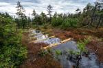 Nadace Ivana Dejmala pomohla přírodě více než dvěma miliony korun