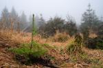 Výsadba druhově rozmanitých lesů