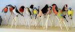 Modely ptáků Marty Vrabcové Bayerové